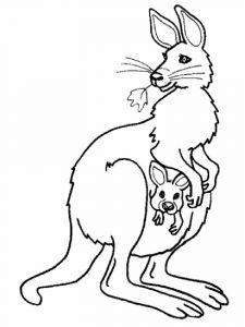 raskraska-kenguru-13
