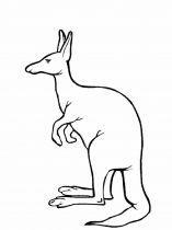 raskraska-kenguru-14