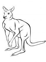 raskraska-kenguru-17