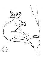 raskraska-kenguru-3