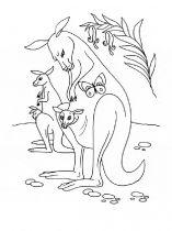 raskraska-kenguru-5