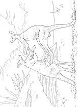 raskraska-kenguru-9