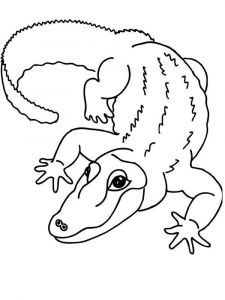 raskraska-krokodill-3