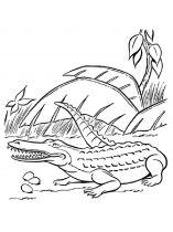 raskraska-krokodill-6