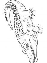 raskraska-krokodill-9