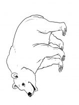 raskraska-medved-1