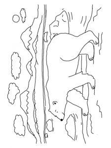 raskraska-medved-12