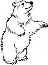 raskraska-medved-16