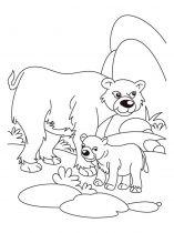 raskraska-medved-17