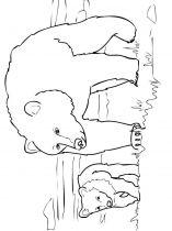 raskraska-medved-19
