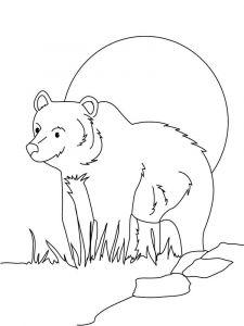 raskraska-medved-9
