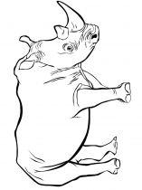 raskraska-nosorog-14