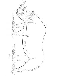 raskraska-nosorog-15