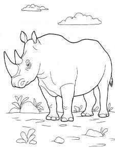 raskraska-nosorog-2