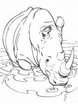 raskraska-nosorog-4