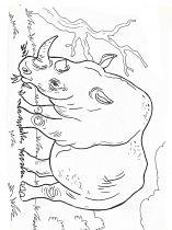 raskraska-nosorog-8