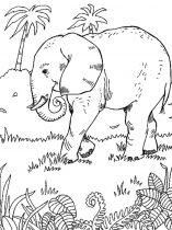 raskraska-slon-4