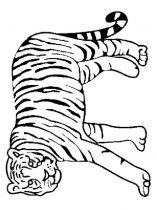 raskraska-tigr-10