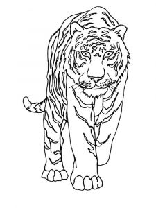 raskraska-tigr-8