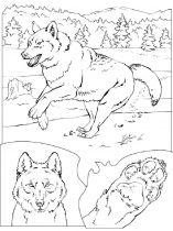 raskraska-volk-11