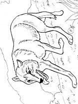 raskraska-volk-12