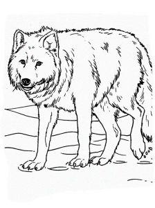 raskraska-volk-5