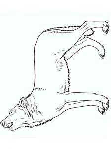 raskraska-volk-9
