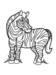 raskraska-zebra-10