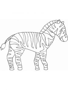 raskraska-zebra-11