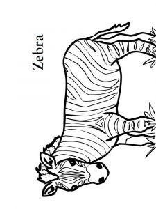 raskraska-zebra-12