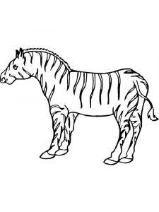 raskraska-zebra-9
