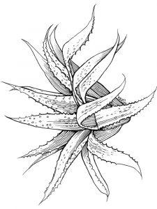 raskraski-cvety-aloe-3