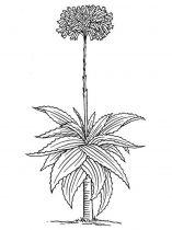 raskraski-cvety-aloe-5