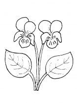 raskraski-cvety-fialka-4