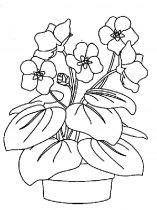 raskraski-cvety-fialka-5