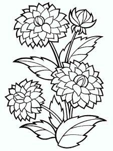 raskraski-cvety-georgin-2