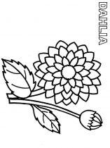 raskraski-cvety-georgin-3