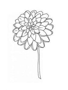 raskraski-cvety-georgin-8