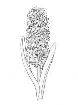 raskraski-cvety-giacint-2