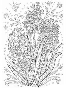 raskraski-cvety-giacint-3
