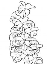 raskraski-cvety-giacint-5