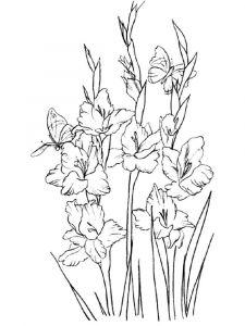 raskraski-cvety-gladiolus-11