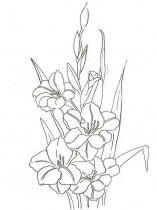 raskraski-cvety-gladiolus-2