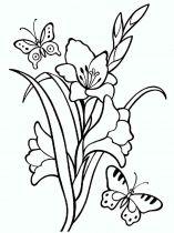 raskraski-cvety-gladiolus-4