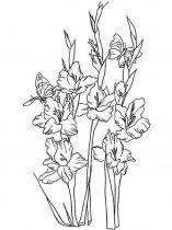 raskraski-cvety-gladiolus-5