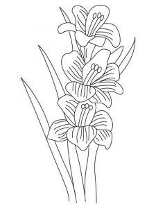 raskraski-cvety-gladiolus-7