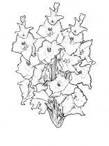 raskraski-cvety-gladiolus-8