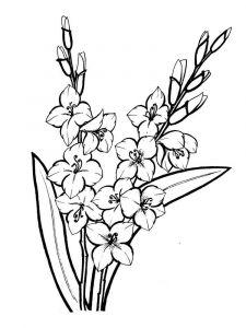 raskraski-cvety-gladiolus-9