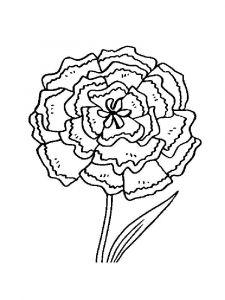 raskraski-cvety-gvozdika-11