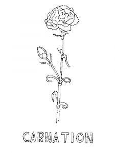 raskraski-cvety-gvozdika-3